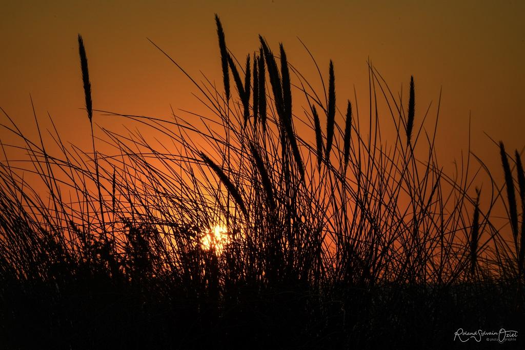 La nature en Vendée