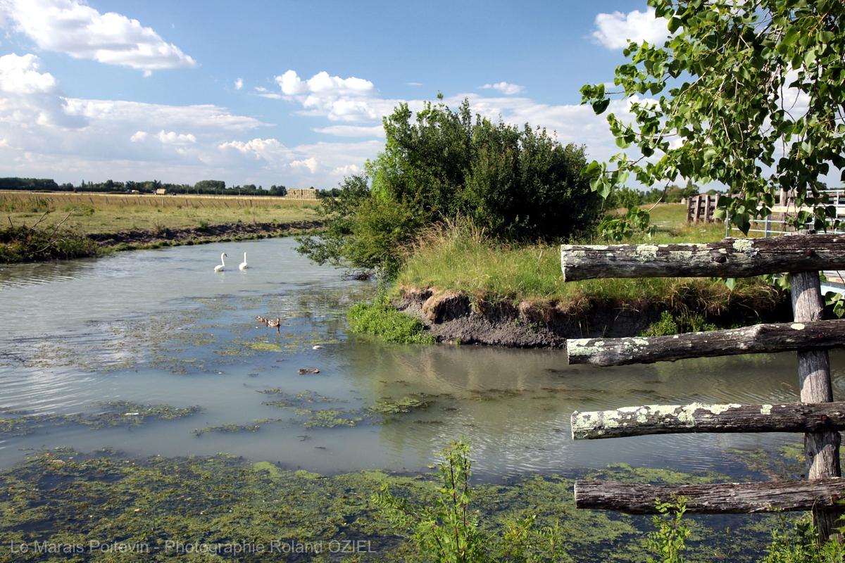 nature préservée près du camping en Vendée